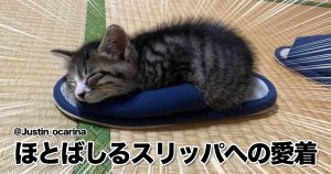 カワイイがここにある…爆睡ネコの「奇跡の寝相」コレクション 10選