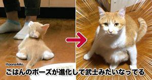 猫が成功した「モデル顔負けのポージング」がこちら 10選