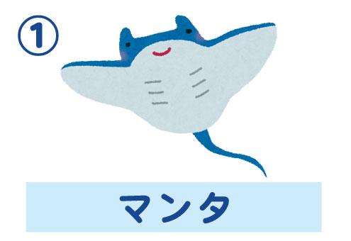 水族館 自分ルール 心理テスト マンタ