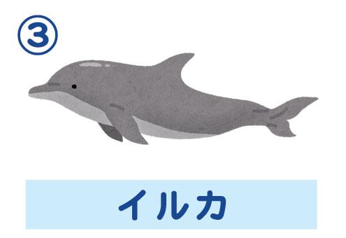 水族館 自分ルール 心理テスト イルカ