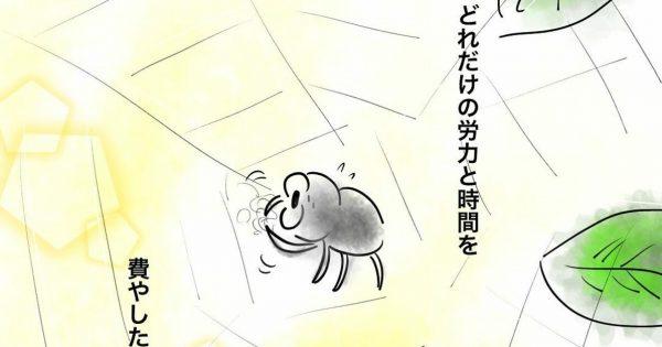 クモの健気な姿に元気を与えてもらった話