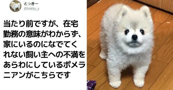 「犬との生活って、マジ最高だな」7選