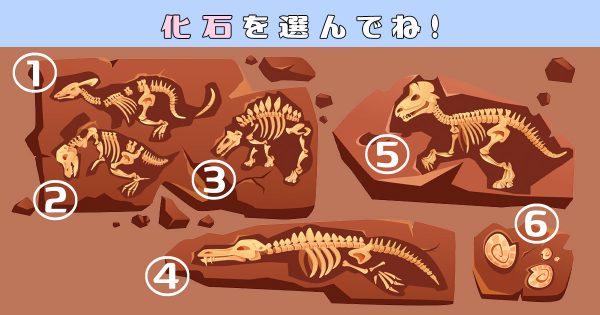 【心理テスト】あなたの心の推定年齢は?化石を選ぶと性格の「達観度」が判明
