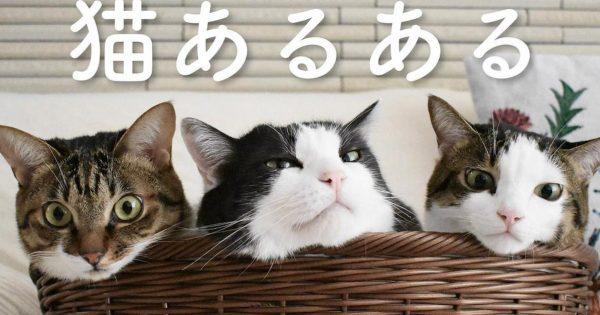 ニヤケたら負け!フワモフの「猫あるある」が天国でしかない件
