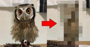フクロウが「謎のシュッとした生物」に化けるの見たことある?