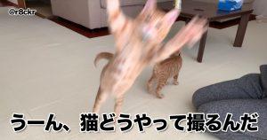 「ネコ撮るのうまい人、コツ教えて…」 10選