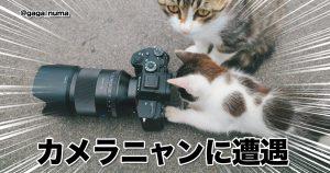 「猫の手を借りる」ってこういうことだっけ? 8選