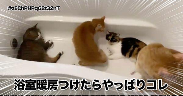 結局わからん。「猫とお風呂」の相性問題 8選