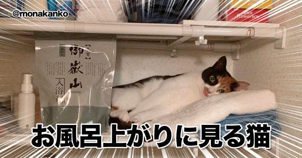 「猫のお気に入りポジション」が予測不能すぎるw 8選