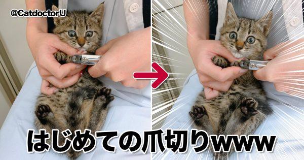 猫の「生まれて初めて〇〇した時」のリアクションが鬼キュート! 8選
