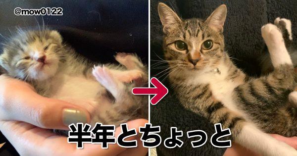 比較写真で振り返る「猫の成長物語」に涙が出てきた。 8選
