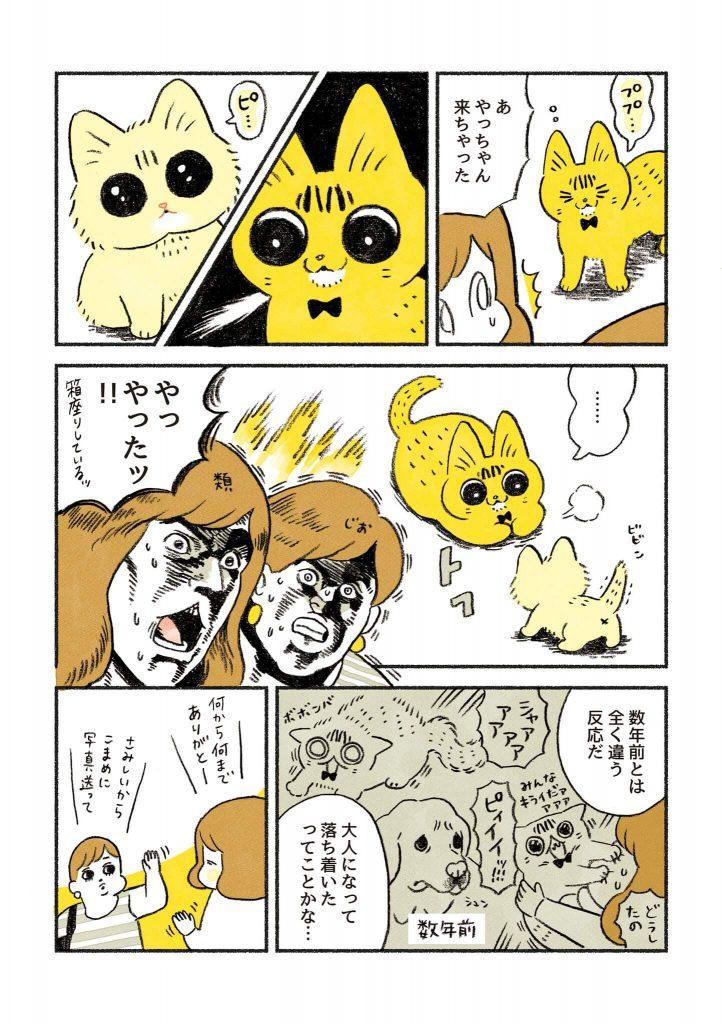 茶トラのちーちゃん2-2