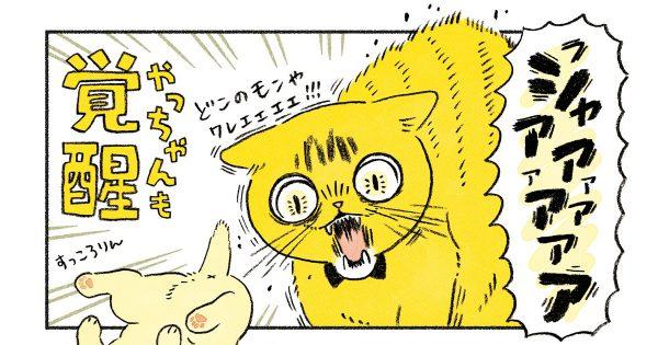 「新入り」がやって来た!先住猫と家族のドタバタな生活に目が離せない