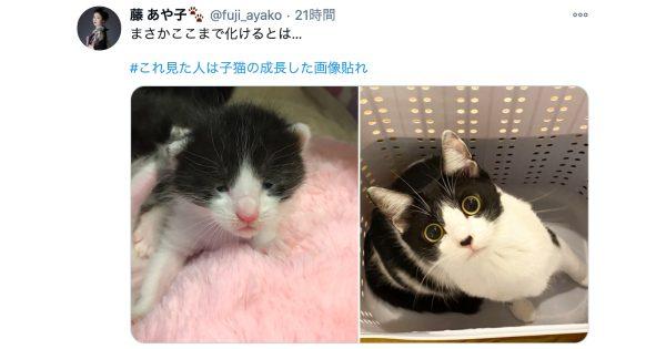 子猫→成猫の「成長ビフォーアフター」は何故こんなに愛しいの? 10選