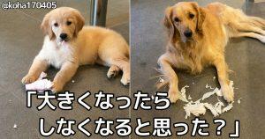 萌えて笑える「犬との生活」7選