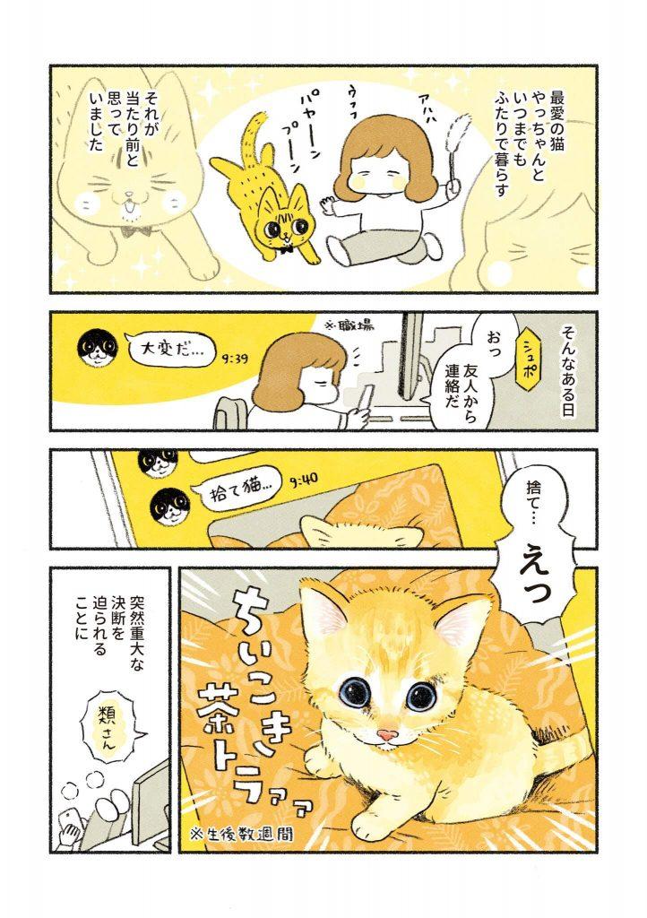 茶トラのちーちゃん1-1