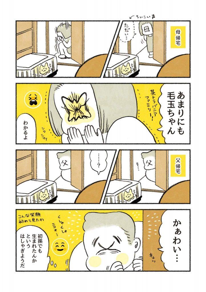 茶トラのちーちゃん2-3