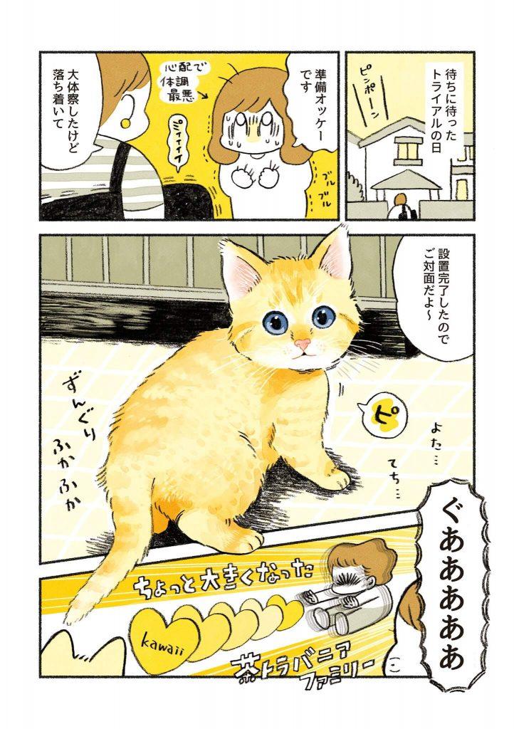 茶トラのちーちゃん2-1