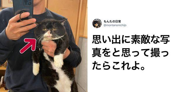 「感情が顔に出るタイプの猫」が愛おしすぎる 8選