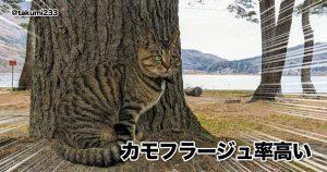 【見つけた?】猫の「擬態」がマジでシャレにならない 10選
