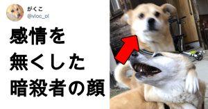 「犬、お前、そんな顔するんだな…」 7選