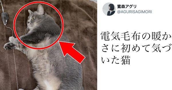 呆然…「電気毛布を知ってしまったネコ」の表情です。