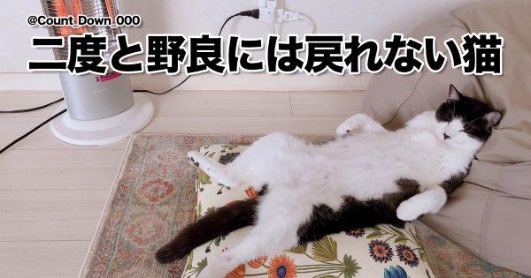 「野生本能を失った猫」の無防備すぎる姿がこちら 9選
