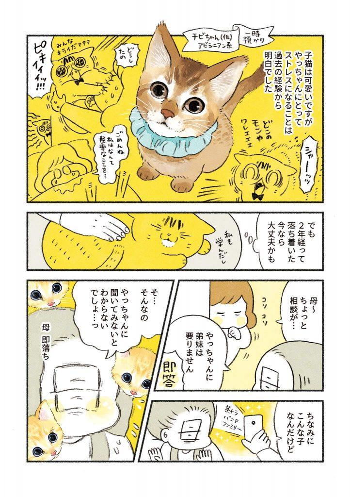 茶トラのちーちゃん1-2