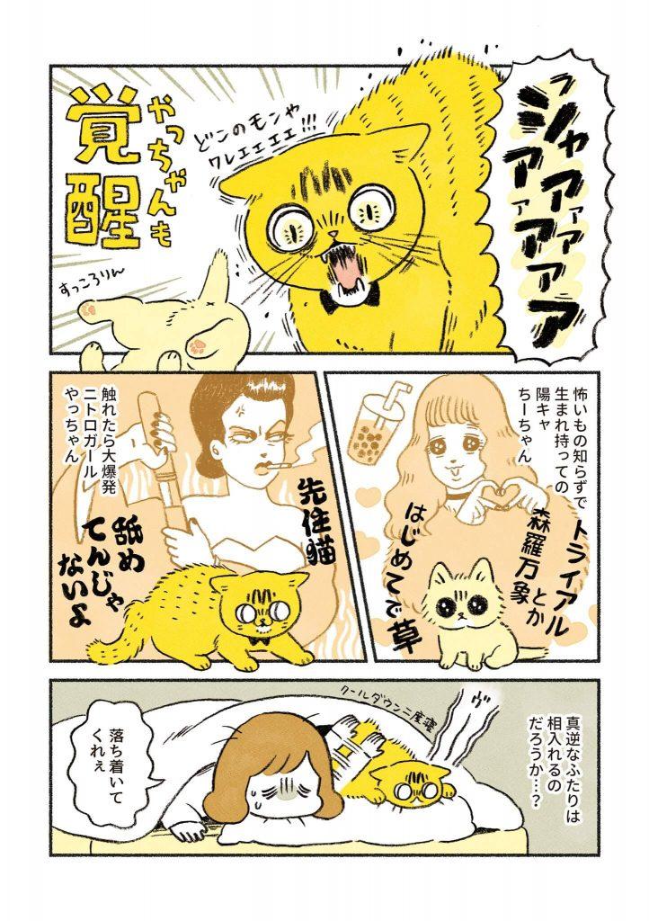 茶トラのちーちゃん3-3