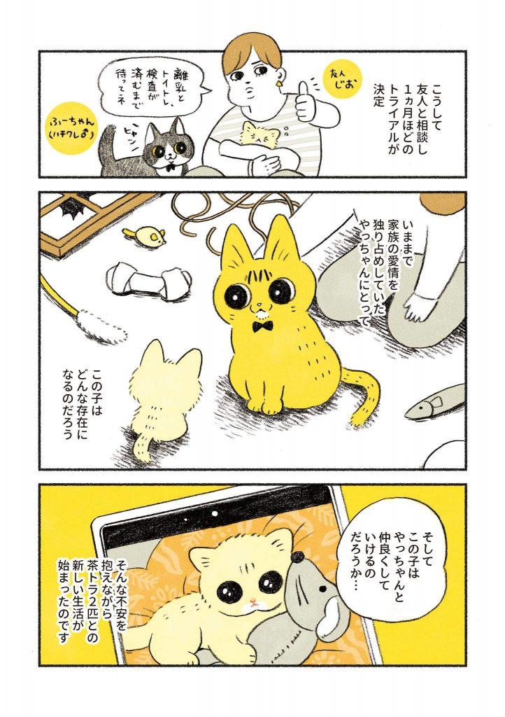 茶トラのちーちゃん1-3