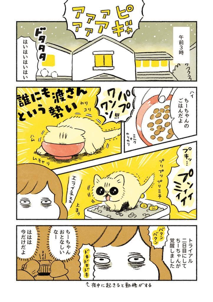 茶トラのちーちゃん3-1