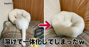 【溶けて消えた!?】ネコの「トランスフォーム芸」すごっ 9選