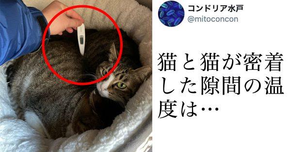 【トリビア】猫2匹が密着した隙間の温度をご存知ですか?