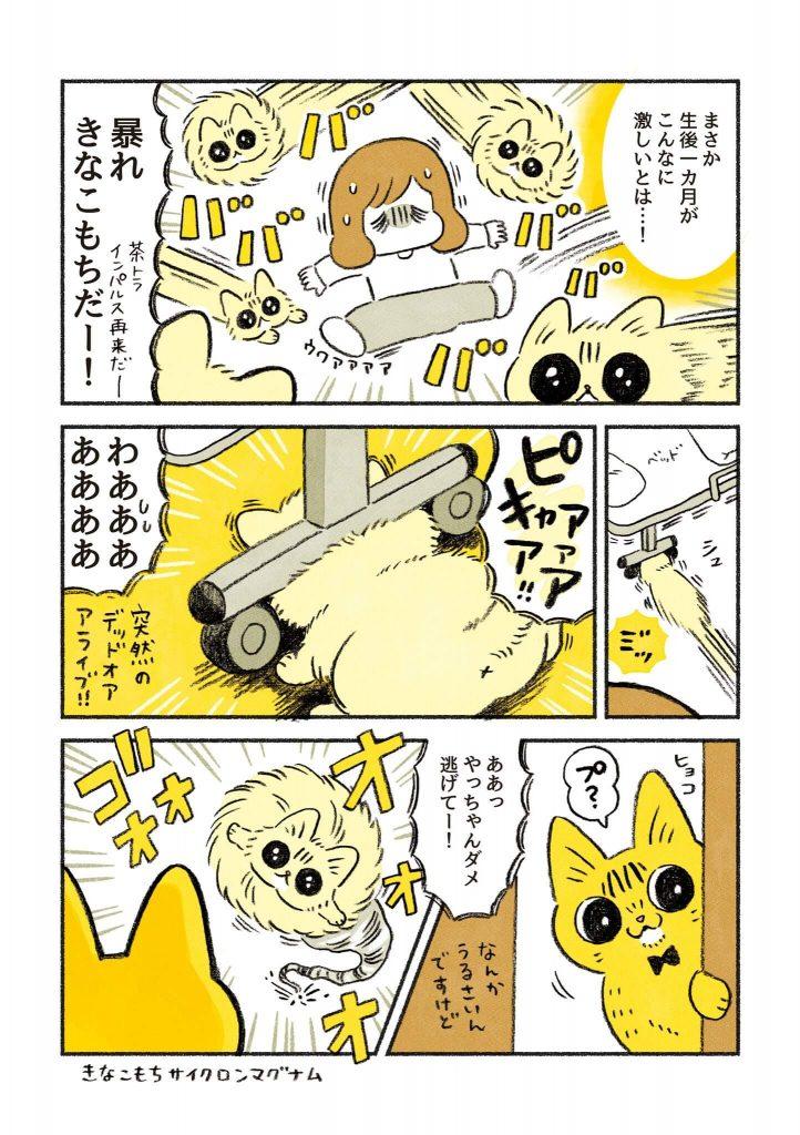 茶トラのちーちゃん3-2