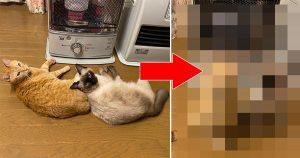 【4コマ】ストーブで温まりたい猫 VS 阻止する飼い主の攻防w