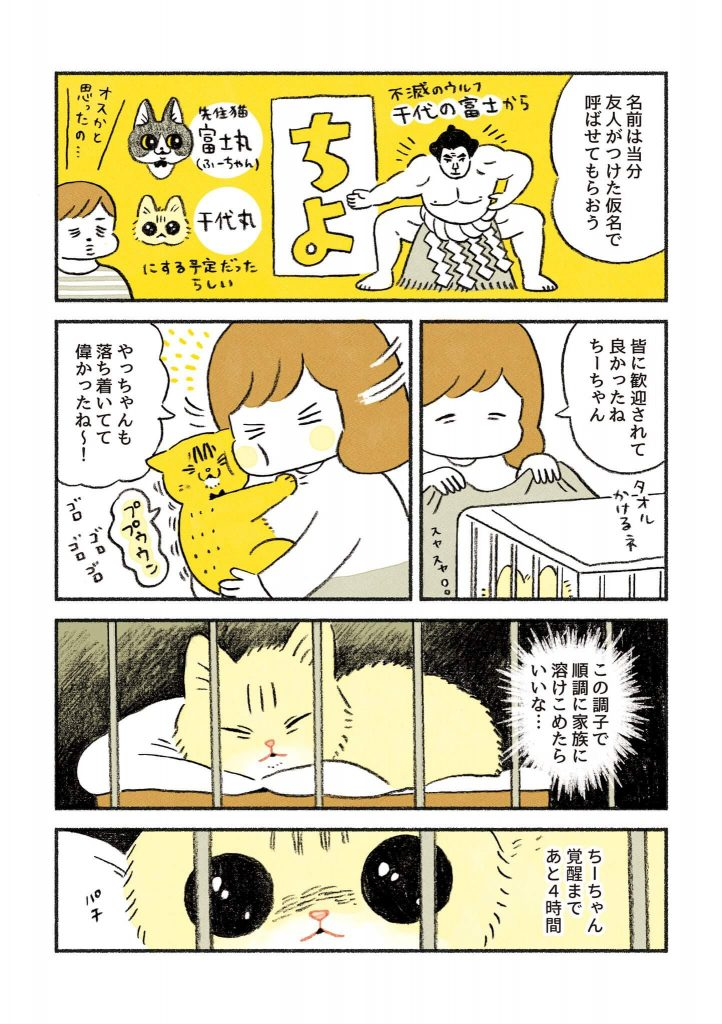 茶トラのちーちゃん2-4