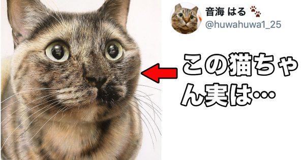 【15万人が驚愕】この猫ちゃんの驚きの正体とは…?