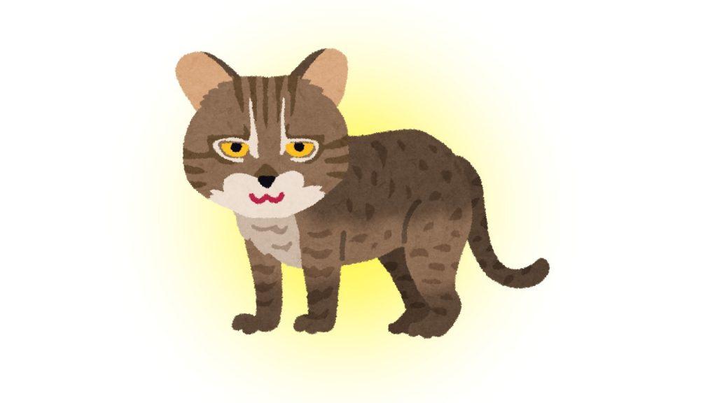 フレーム 猫 性格 例える 心理テスト イリオモテヤマネコ