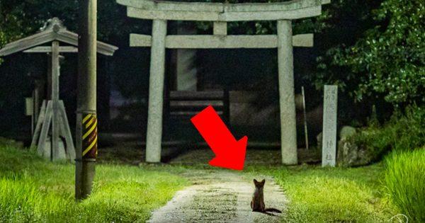 【奇跡の一枚】夜の鳥居に…「リアルお稲荷さん」現る!