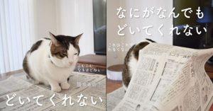 【癒し500%】ニヤニヤしすぎ注意な「今日の猫あるある」シリーズ!