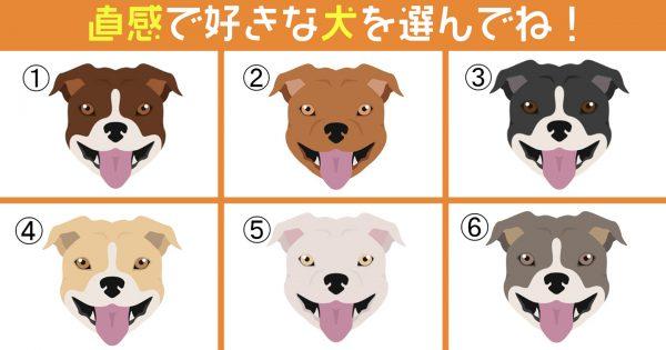 【心理テスト】好きな犬を選ぶとわかる!あなたの言葉は「直球?マイルド?」
