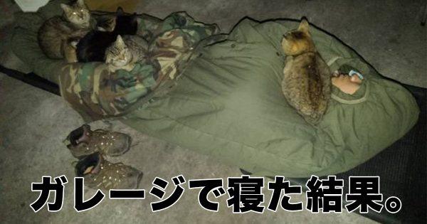 ガレージで寝た結果…たくさんの「猫たんぽ」が快適すぎた