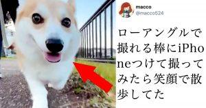 【新発見】散歩中の愛犬を正面から撮影したらウキウキだった件について