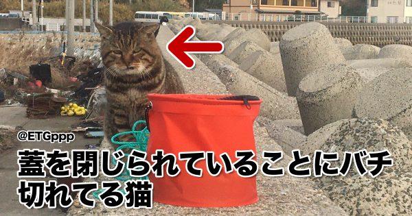 【そこに魚があるのに…】人類への怒りが収まらないブチギレ猫 8選