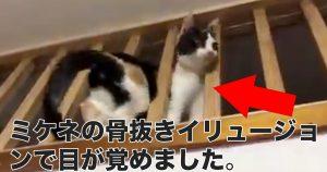 【9万いいね】忍者のように隙間をすり抜ける猫にビックリ「骨どうなって…?」