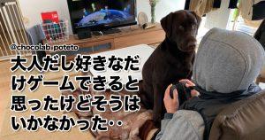 「かまってモードに突入した犬」を止められる人っているの? 8選