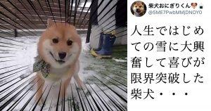 「犬は喜び 庭駆け回る」の「実物」がやっと見れた…!