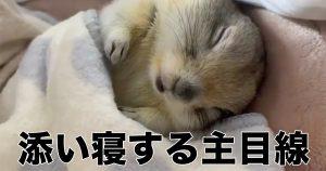 リスと添い寝したことある?「可愛い」じゃ足りない光景がそこに…