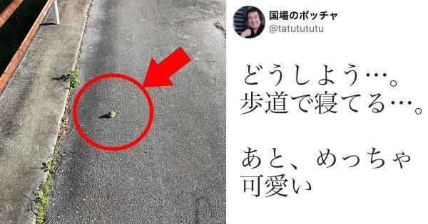 【41万いいね】歩道のテニスボール…じゃない!?