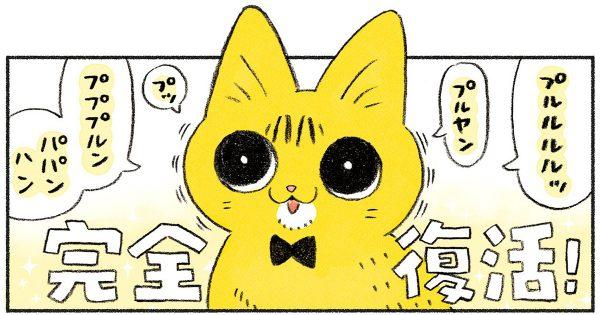 距離感にハラハラ…先輩猫と新入りの愛の育み方が極道すぎる件w